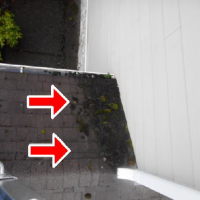 Mold damage can effect roof